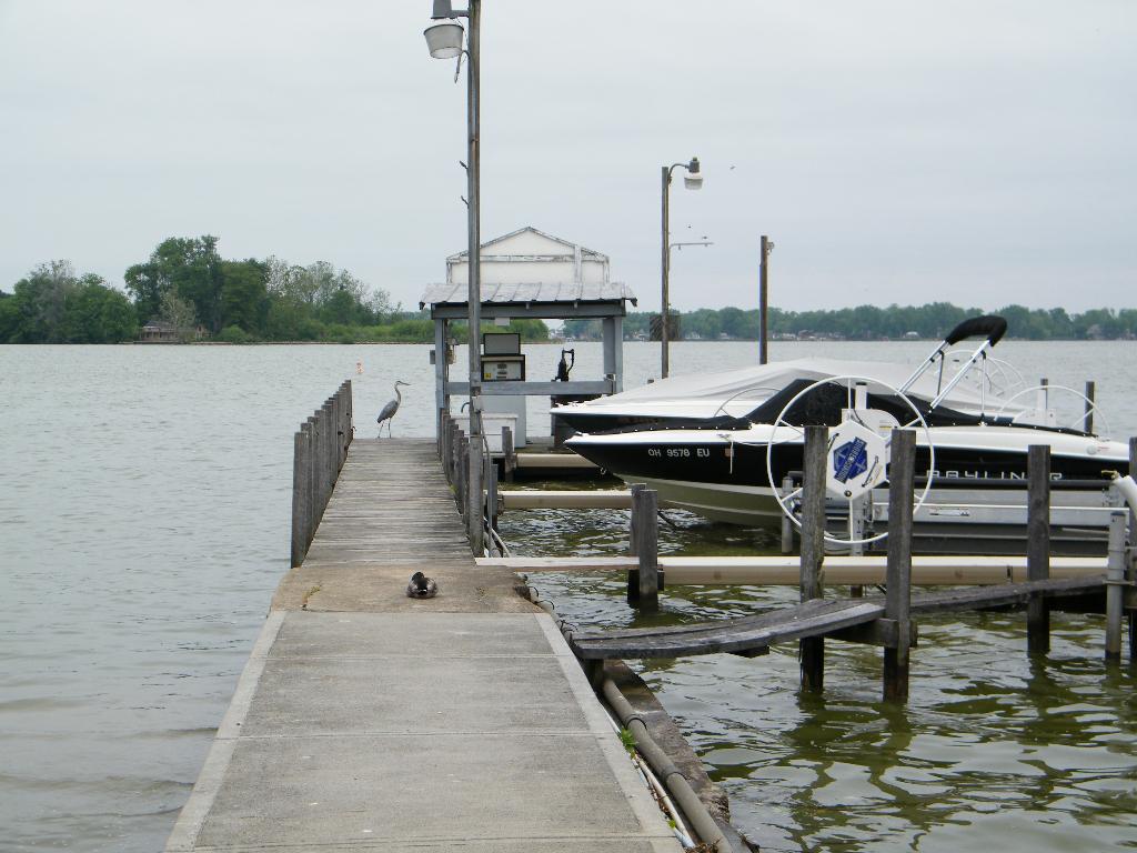 Heron Duck on Pier
